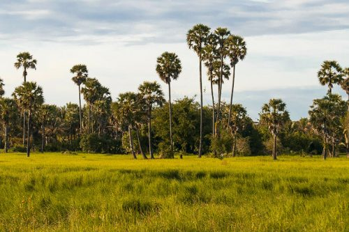 SIEM REAP - Countryside