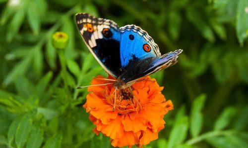 CAMERON HIGHLANDS - Butterfly Farm