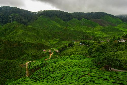 CAMERON HIGHLANDS - Cameron Valley Tea House