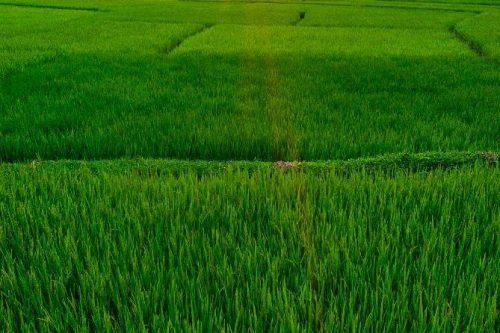 Vietnam